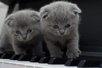 cat-1845787_640-420x280