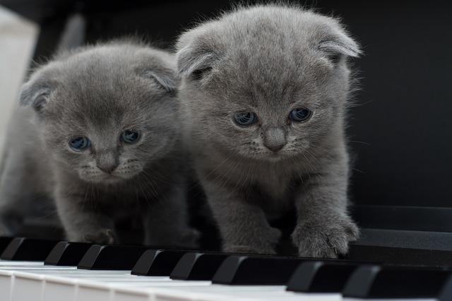 cat-1845787_640