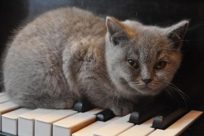 cat-420x280