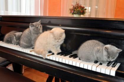 cats-420x280